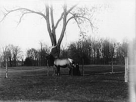 [Two Women and an Elk]