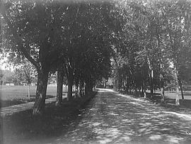 [Bagot Street and City Park, Kingston]